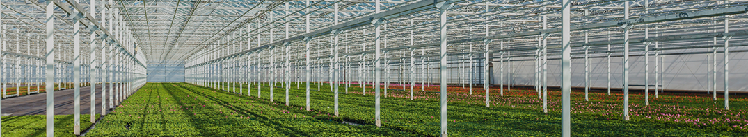 Greenhouses-banner.png